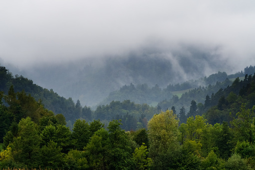 Mixed forest and hills in the fog on an early autumn day