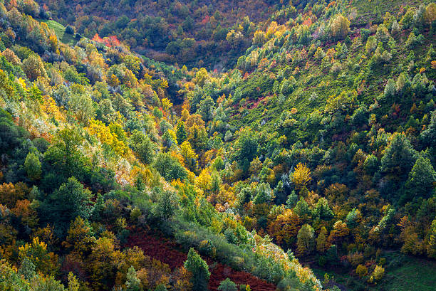 mixed forest, autumnal look mixed forest, autumnal look, Ancares, Galicia galicia stock pictures, royalty-free photos & images