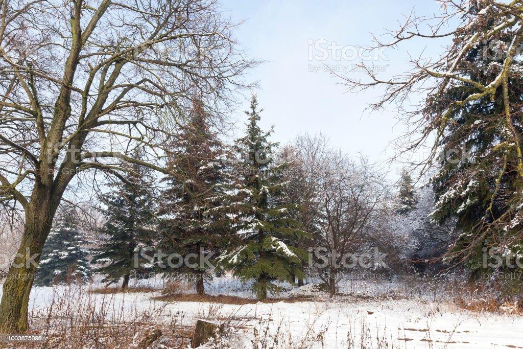 Bosque de mixtos - foto de stock