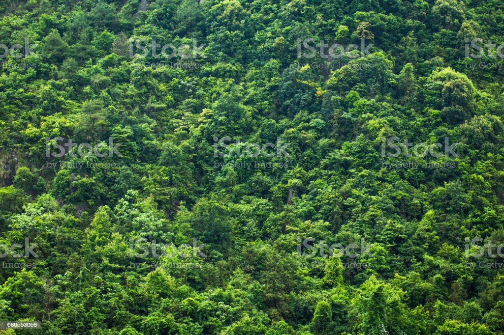 Mixed forest royalty free stockfoto