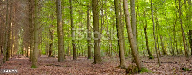 istock mixed forest 90407725
