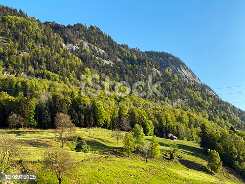 Mixed forests with deciduous and evergreen trees on the slopes of the Pilatus massif and in the subalpine valleys at the foot of the mountain, Alpnach - Canton of Obwalden, Switzerland (Kanton Obwald, Schweiz)