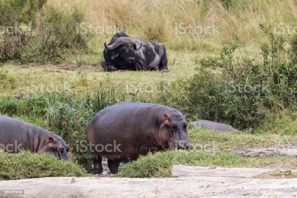 Mixed group of animals near a small pond in the savannah. royalty-free stock photo
