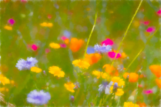 Mixed group of English wildflowers stock photo