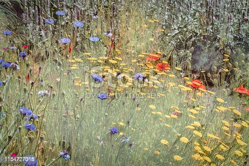 Mixed group of English wildflowers taken in a meadow and heavily post processed to create a painterly effect.