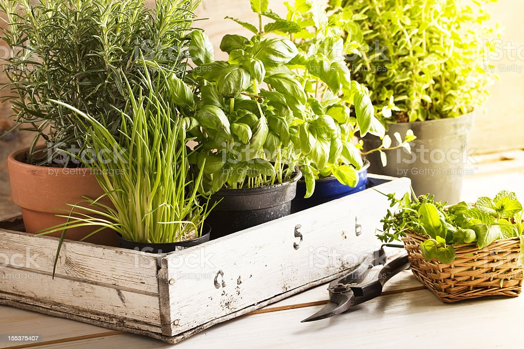 mixed herbs in pots stock photo