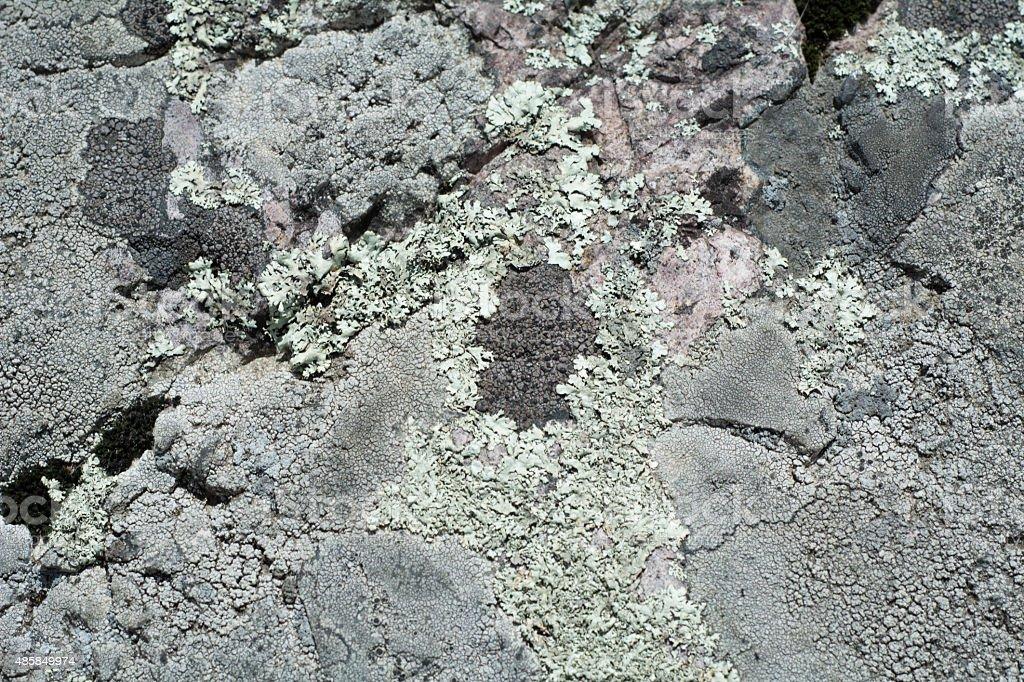 Mixed lichen stock photo
