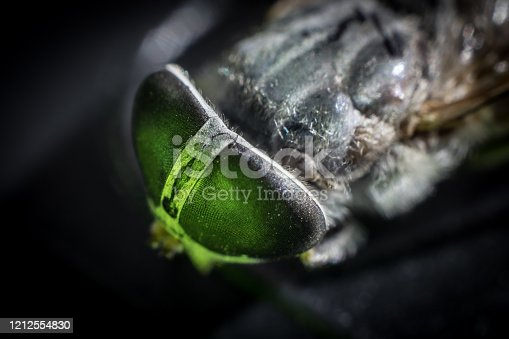 Horsefly or Gadfly or Horse Fly Diptera Insect Macro. Selective focus. Mixed light