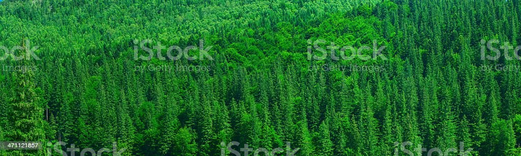 Mixed mountain forest stock photo