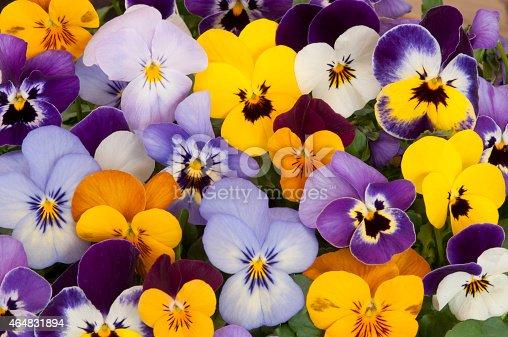 istock mixed pansies 464831894
