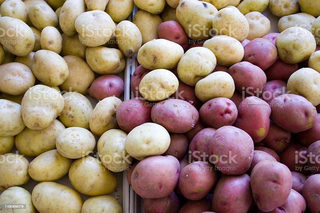 Mixed potatoes stock photo