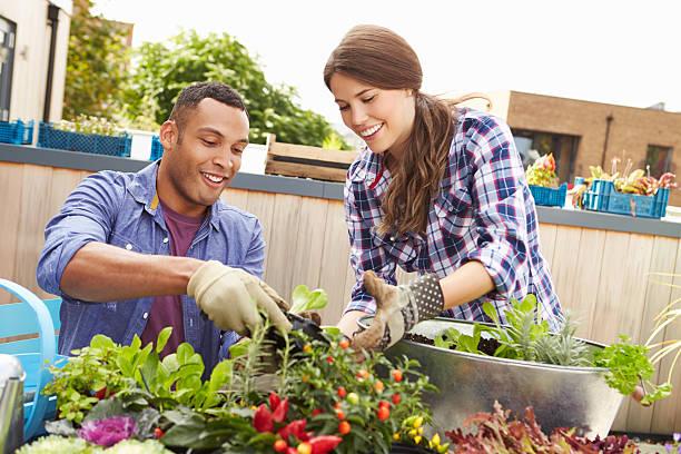 mixed race couple pflanzen garten auf dem dach zusammen - urbaner garten stock-fotos und bilder