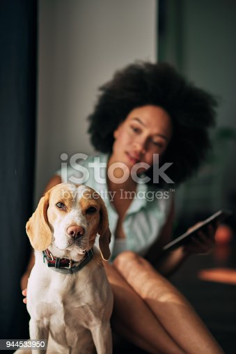 istock Mixed race woman petting dog. 944533950