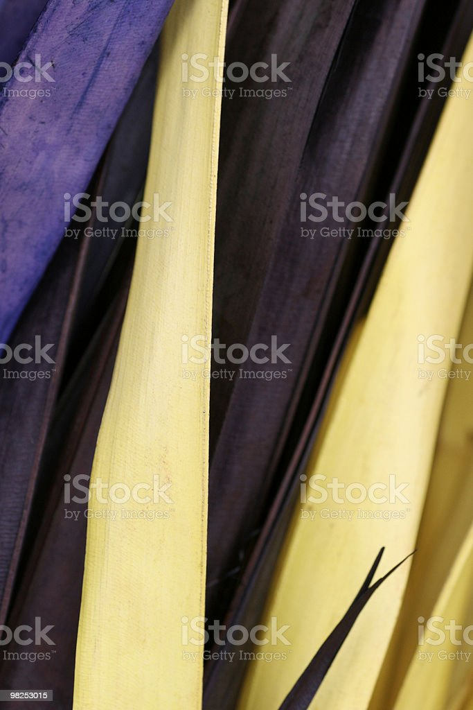 Mixed reeds royalty-free stock photo