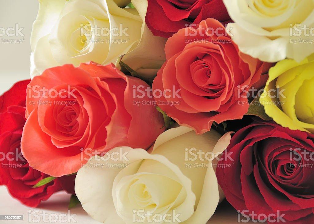 Mixed roses royalty-free stock photo