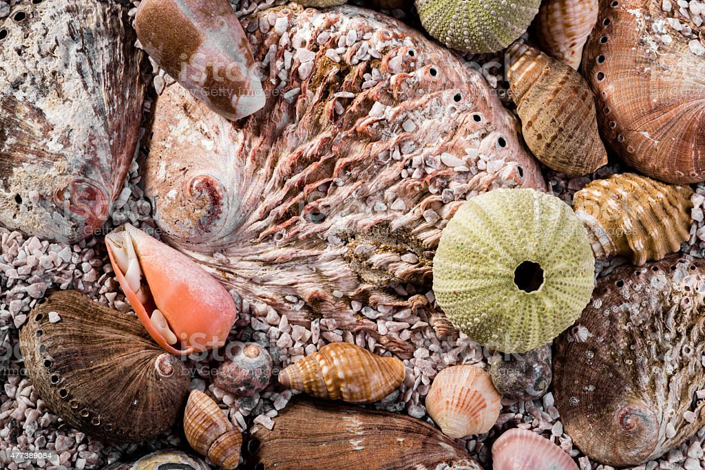 Mixed sea shells in course sea sand. stock photo