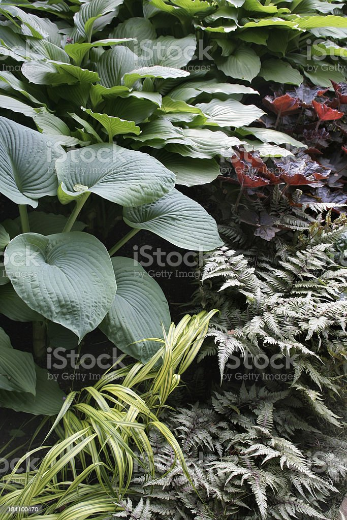 Mixed Shade Garden Vt royalty-free stock photo