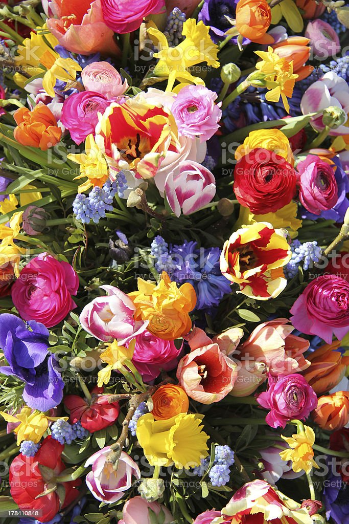 Mixed Spring Flowers royalty-free stock photo