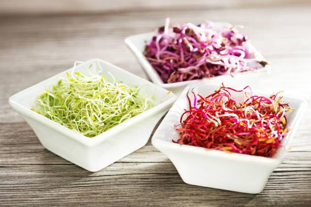 mixed sprouts in small bowls on wooden table beetroot, radish and alfalfa sprouts in china bowls on wooden table bean sprout stock pictures, royalty-free photos & images