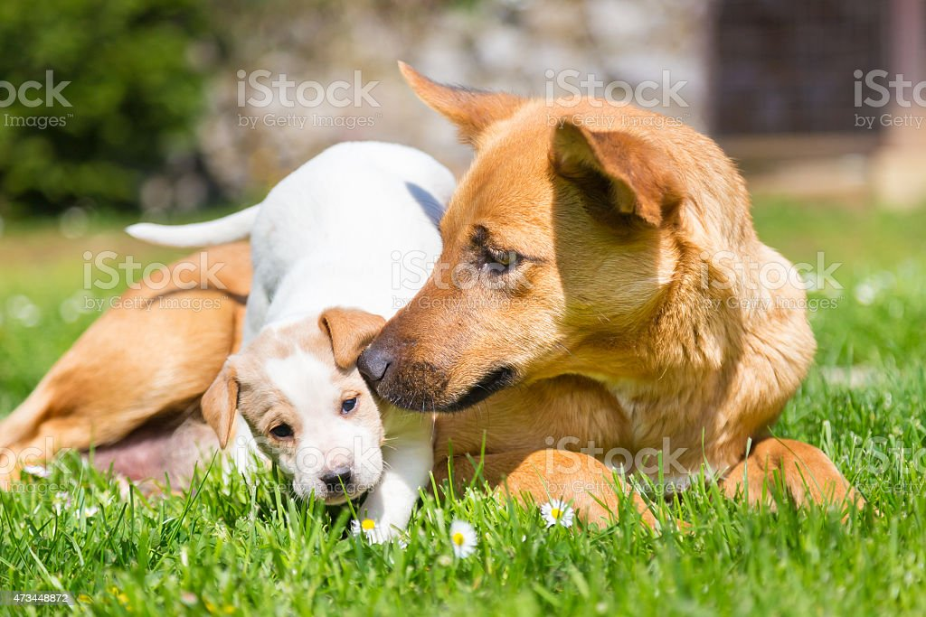 Mixed-breed cute little dog family. stock photo