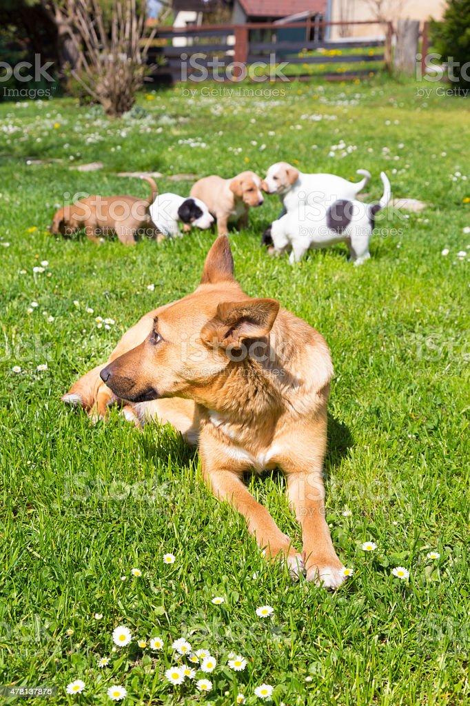 Mixed-breed niedlichen kleinen Hund Familie. – Foto