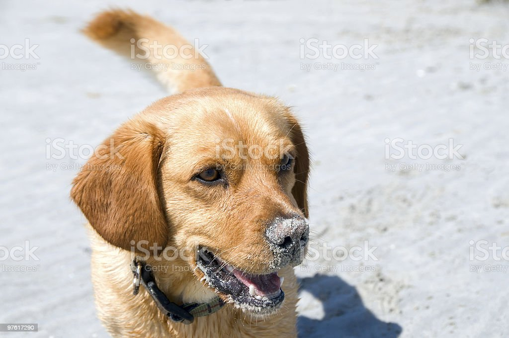 Mixed-breed dog royalty-free stock photo