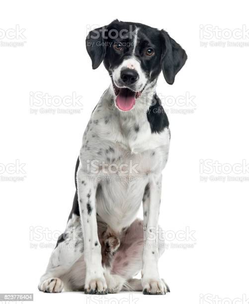 Mixedbreed dog sitting 2 years old isolated on white picture id823776404?b=1&k=6&m=823776404&s=612x612&h=kbsdubrw48 kamkl2ojkxryqeu f3jry0sojpkrp6hy=