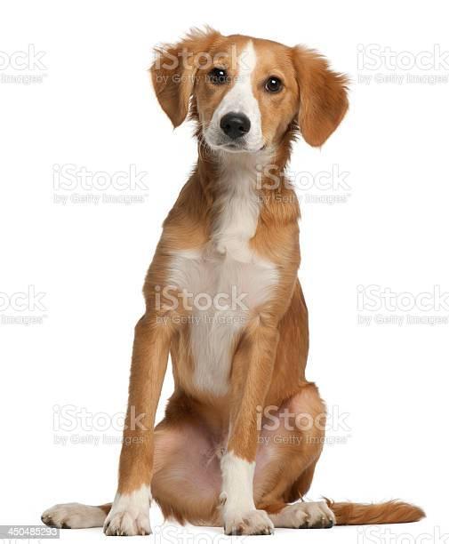 Mixedbreed puppy 4 months old picture id450485293?b=1&k=6&m=450485293&s=612x612&h=b0 mfa2tmnb4xfetu1puau6pmh59ulcfd 554wb3ram=