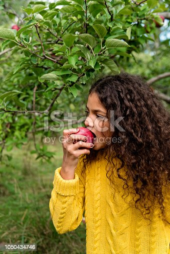 An adorable mixed-race little girl eating apple in an orchard. She has long curly hair. She is wearing warm clothes on an autumn day. Vertical waist up outdoors shot with copy space.