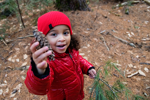 Mixed-race little girl out in the forest to pick up fir branch for DIY Christmas decoration project. This is part of a series. She is wearing red and black warm clothes. Horizontal waist up outdoors shot with copy space.