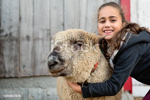 Adorable mixed-race little girl playing with a old sheep on a farm. Wood barn wall in the background. She is wearing warm clothes on a sunny autumn day. She is looking at the camera with a smile. Horizontal waist up outdoors shot with copy space.