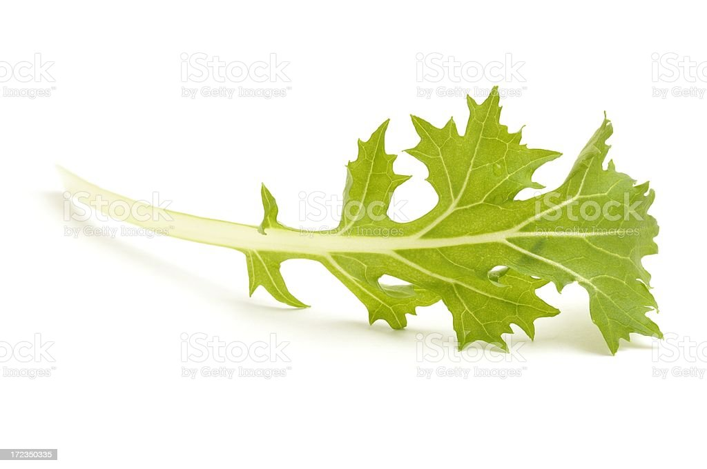 Mizuna leaf stock photo