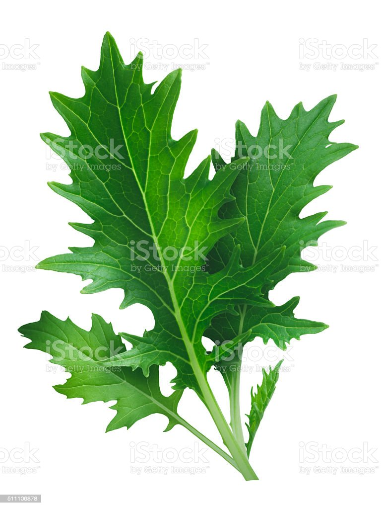 Mizuna leafy salad (Japanese mustard) stock photo