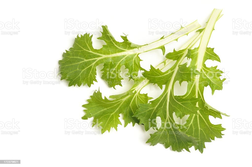 Mizuna leaves stock photo