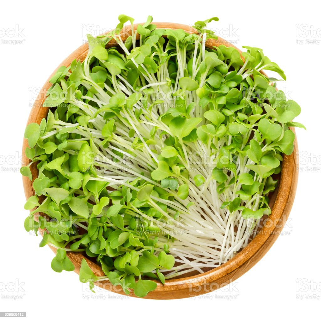 Mizuna sprouts in wooden bowl stock photo