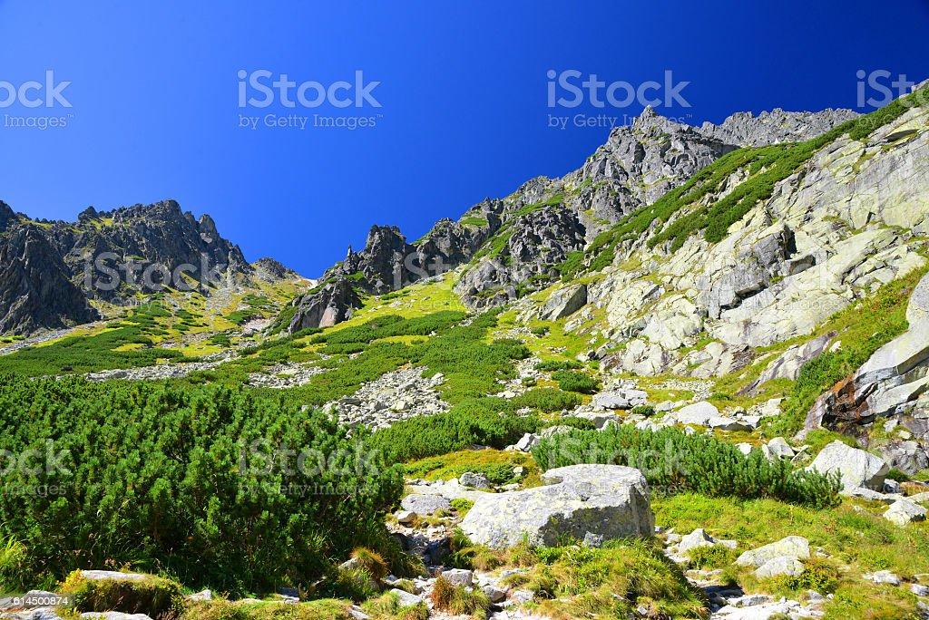 Mlynicka Valley in Vysoke Tatry (High Tatras), Slovakia stock photo