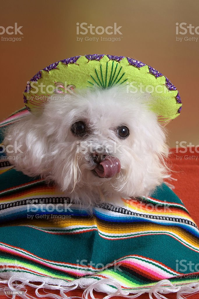 ! mmm.......tequila ! royalty-free stock photo