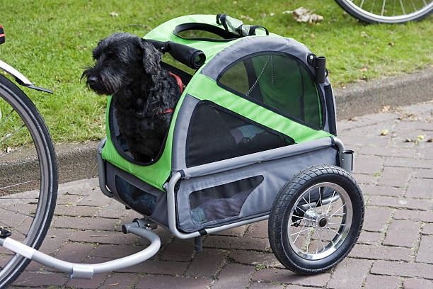 Mobile dog # 1 stock photo
