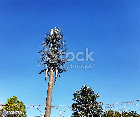 Cellphone base station imitates a tree.