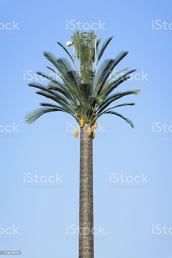 Mobile phone telecommunications mast disguised as a palm tree royalty-free stock photo