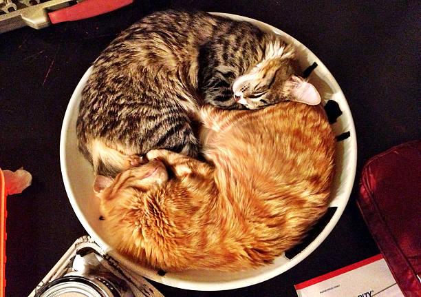 Mobile two cats lying in a bowl together picture id174758664?b=1&k=6&m=174758664&s=612x612&w=0&h=gv7vd3mfgt t0vmvcsnajxgql543iinxqilgknezbra=