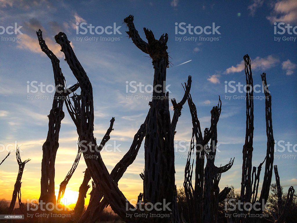 mobilestock landscape sunset royalty-free stock photo