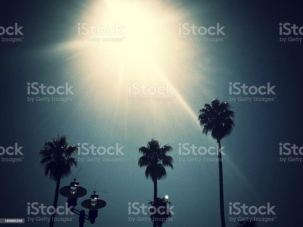 mobilestock palm tree sunshine royalty-free stock photo