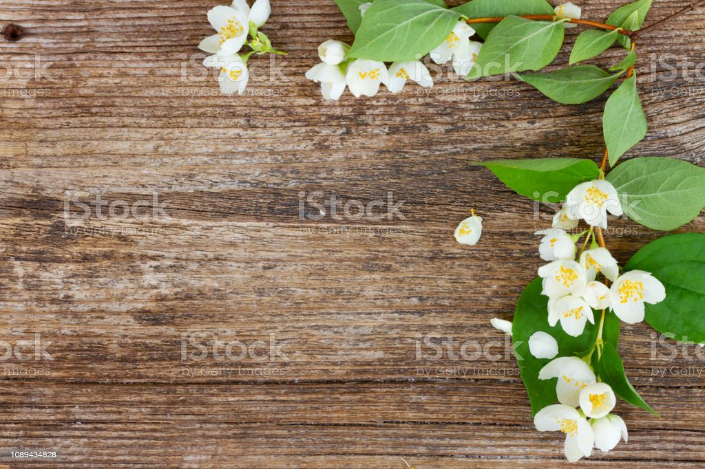 Mock orange flowers stock photo