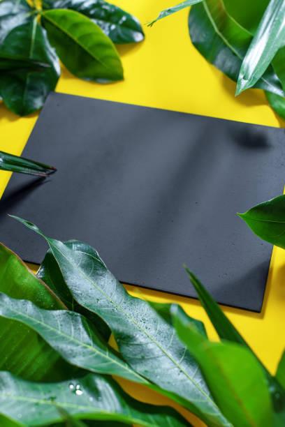 mock up tableau en bois avec des feuilles tropicales - jungle menu photos et images de collection