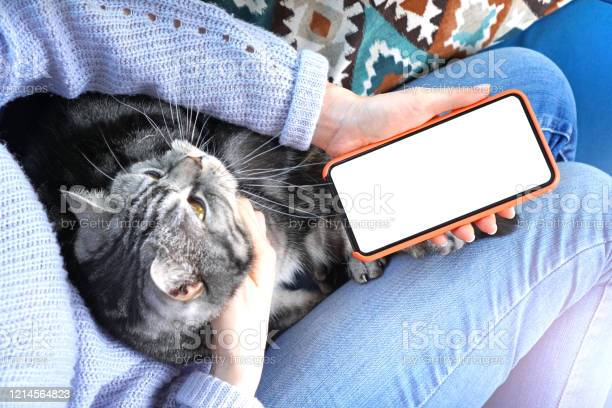 Mockup image of smartphone with empty screen in female hands cat picture id1214564823?b=1&k=6&m=1214564823&s=612x612&h=wkhmdapvprpg6mwy8eofby2vlvzcqyrlpc3miyygeqs=