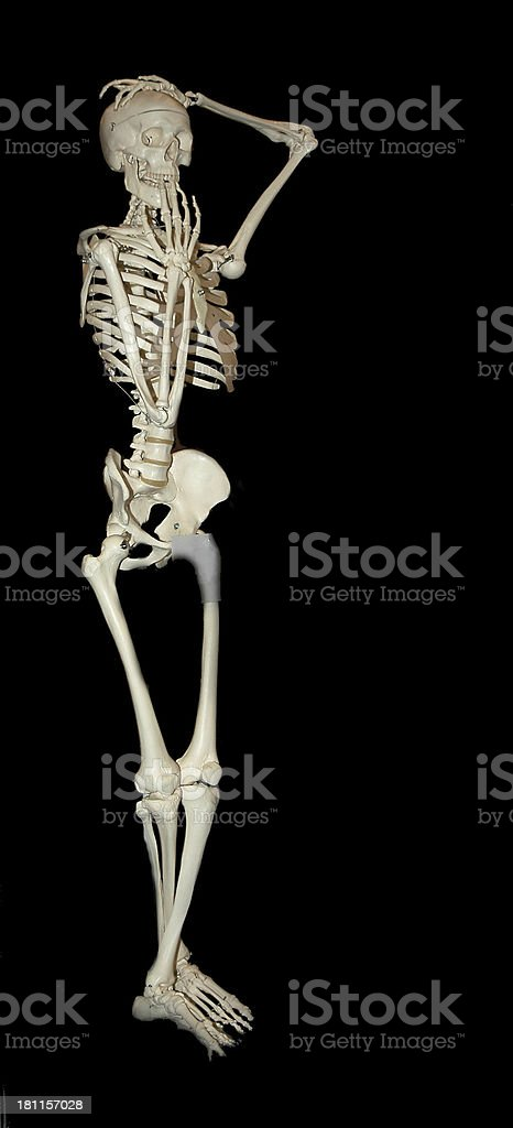 Model  a skeleton of the person royalty-free stock photo