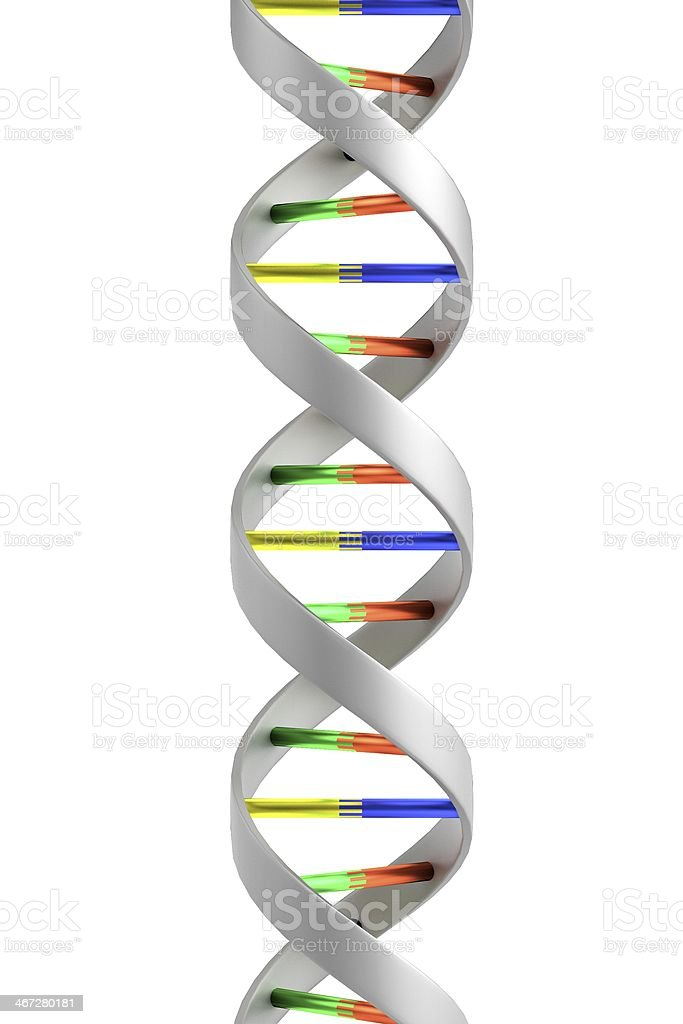 DNA model against a white background royalty-free stock photo