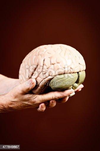 istock Model brain held by wrinkled old hands 477849867