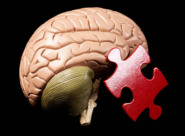 Model brain with jigsaw piece: the human mind is puzzling stock photo